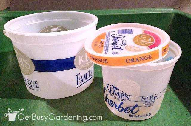 Large ice cream buckets ready to use for winter sowing