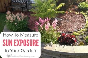 How to Determine Sun Exposure in Your Garden