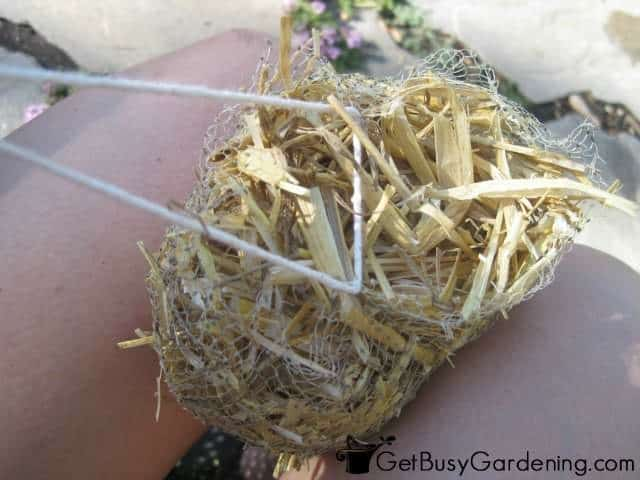 Tying my barley straw bundle before putting it into the pond