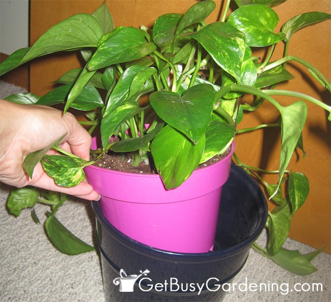Hiding an ugly pot in a decorative container