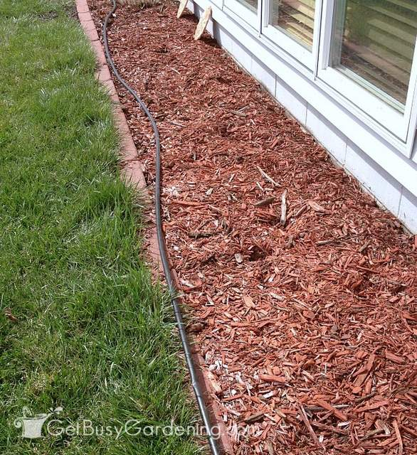 Installing drip irrigation system for potted plants