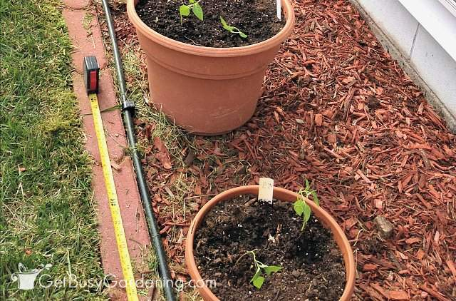Measure spacing between irrigation drippers