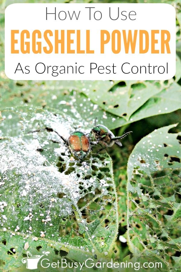 How To Use Eggshell Powder As Organic Pest Control