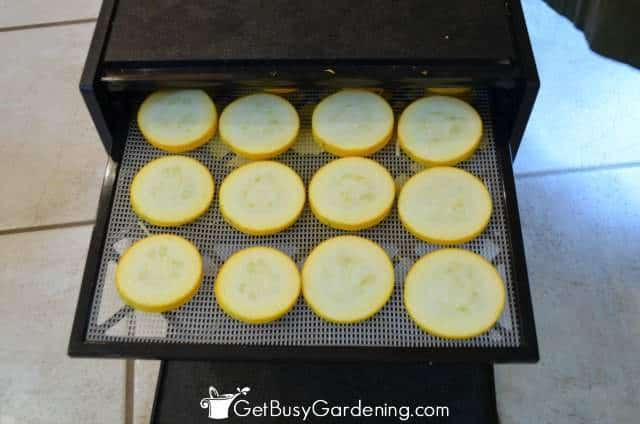 Dehydrate Zucchini Slices For Healthy Chips