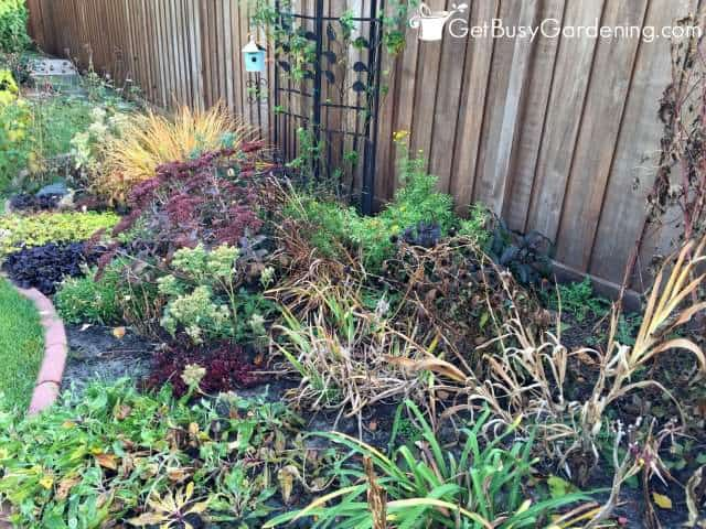Leave the foliage on your plants in the fall
