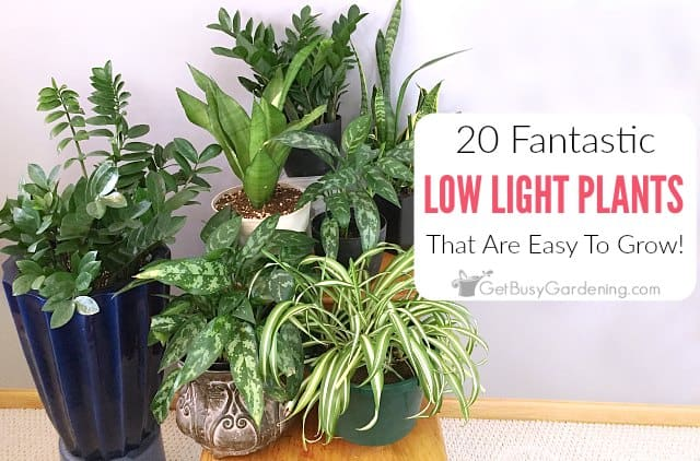 20 Low Light Houseplants That Are Easy To Grow