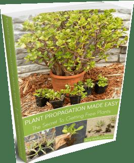 Plant propagation eBook