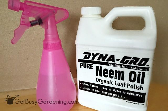 Neem oil organic pest control for gnats