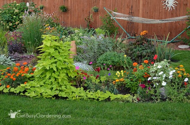 My summer annual garden all filled in