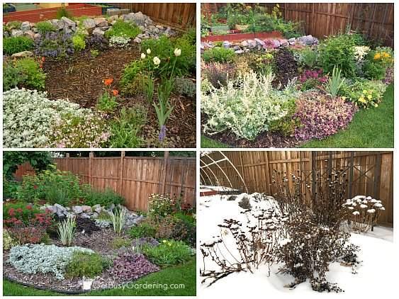 4 season rain garden perennials