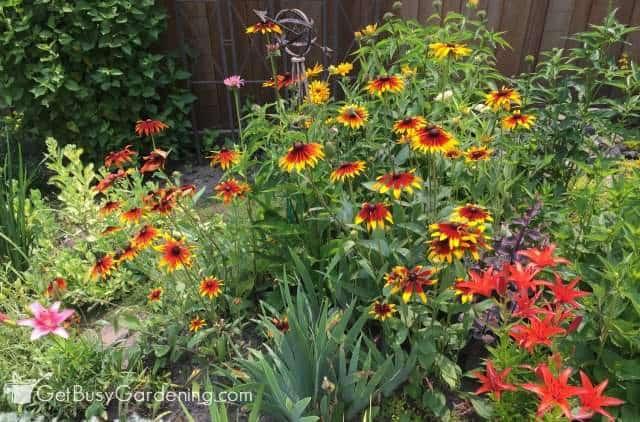 Summer blooming perennials