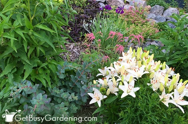 Summer flower and foliage mix