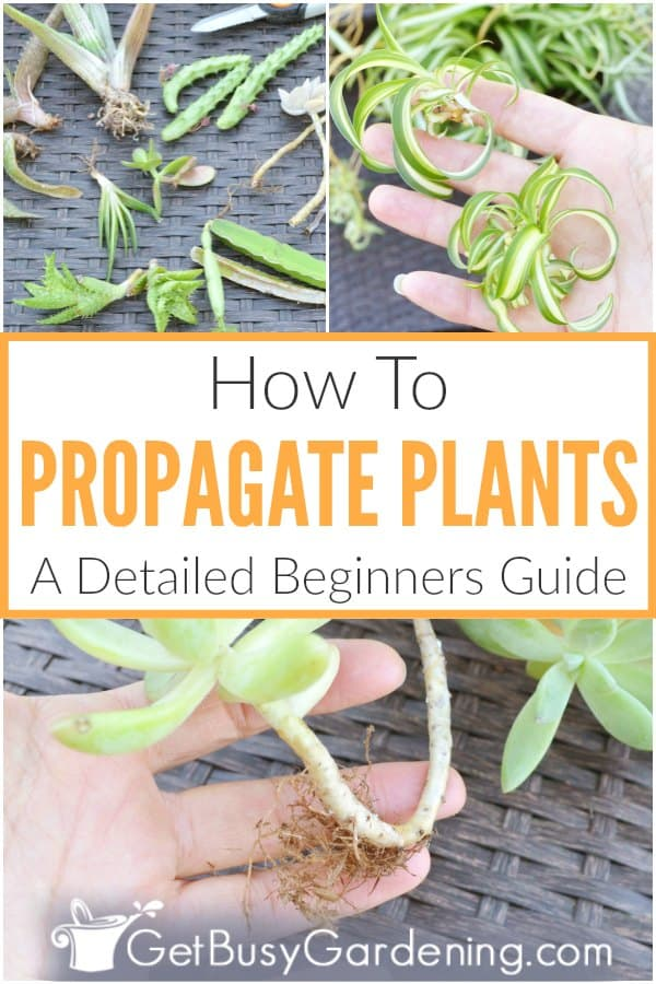 How To Propagate Plants: A Detailed Beginners Guide