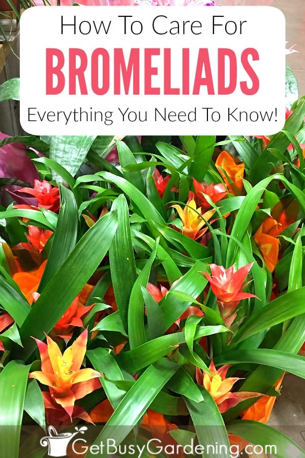 How To Grow Bromeliads: Everything You Need To Know