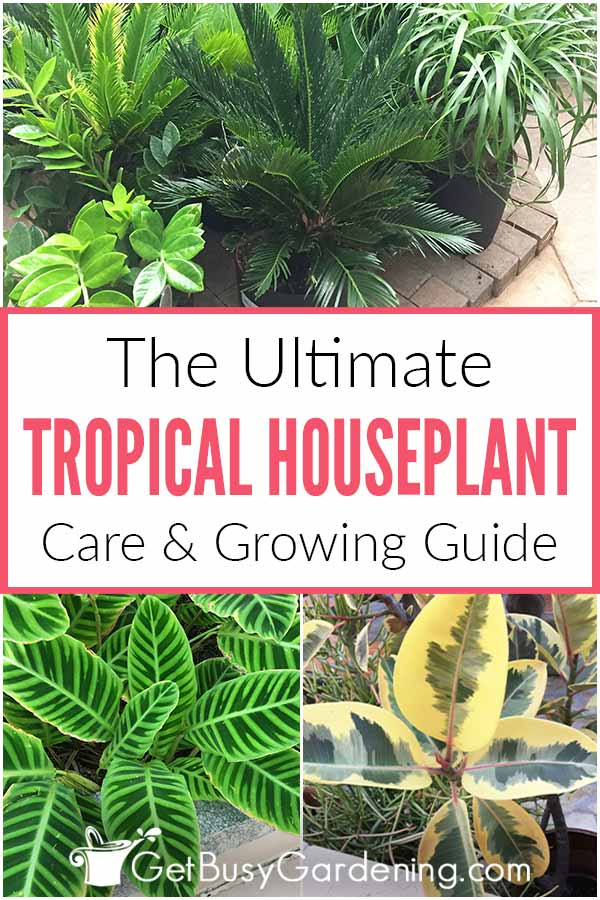 The Ultimate Tropical Houseplant Care Guide