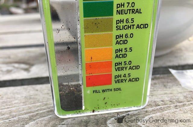 Filling pH measuring kit with soil sample