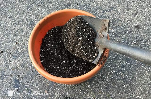 Filling pots with container gardening soil mix