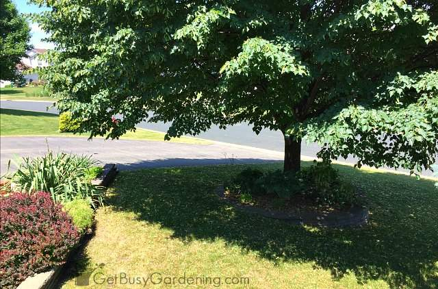 Pruning tree branches makes mowing easier