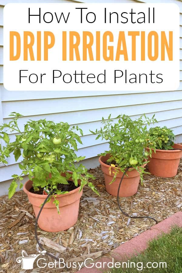 How To Install Drip Irrigation For Potted Plants
