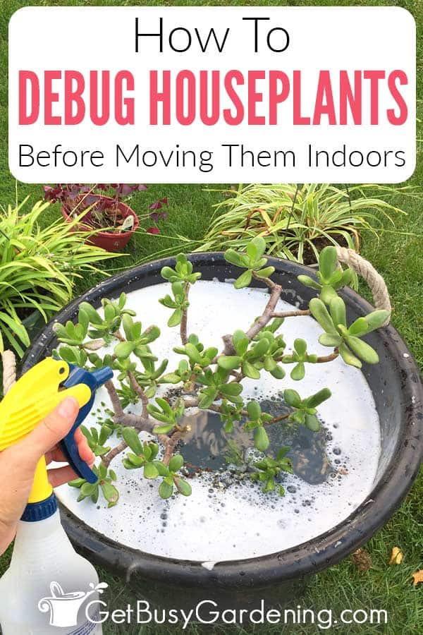 How To Debug Houseplants Before Moving Them Indoors