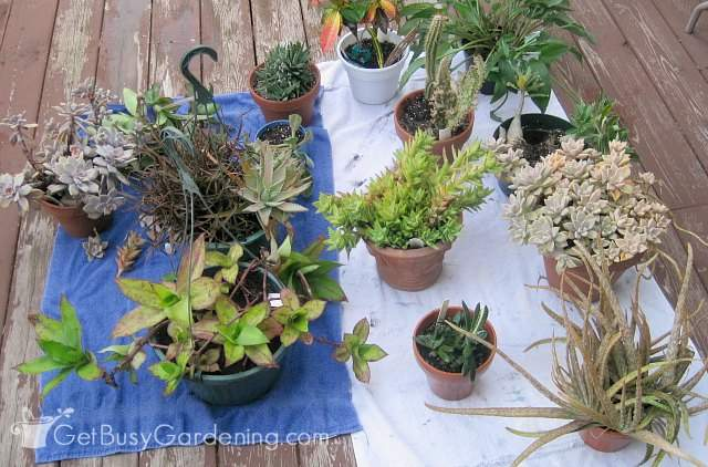 Debugging plants to overwinter inside