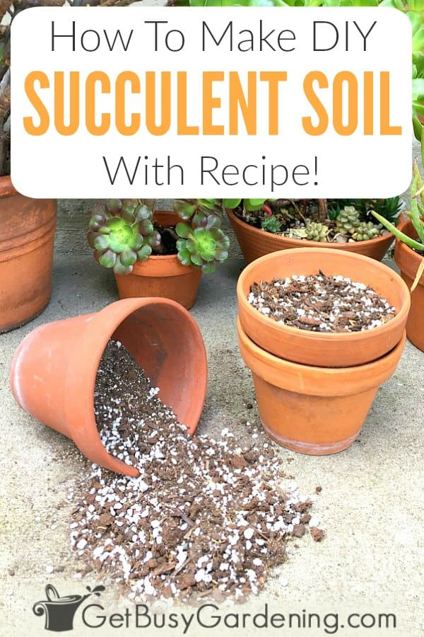 How To Make DIY Succulent Soil: Instructions & Recipe!