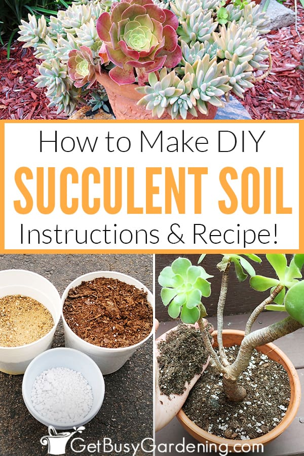 How To Make DIY Succulent Soil: Instructions & Recipe
