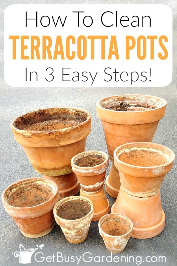 How To Clean Terracotta Pots In 3 Easy Steps!