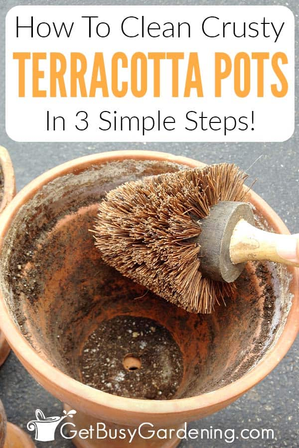 How To Clean Crusty Terracotta Pots In 3 Simple Steps!