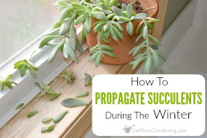 How To Propagate Succulents In Winter