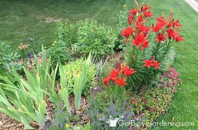 Garden planted with road salt tolerant plants