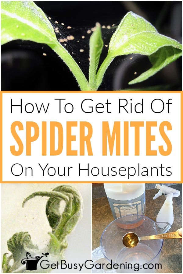 How To Get Rid Of Spider Mites On Your Houseplants