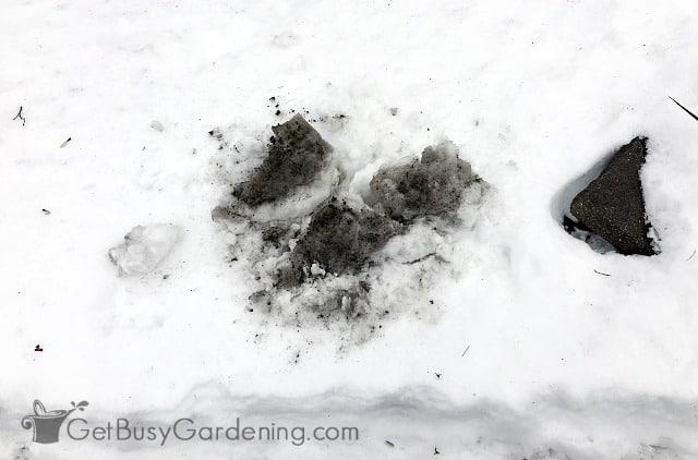 Salt-laced snow can kill sensitive garden plants