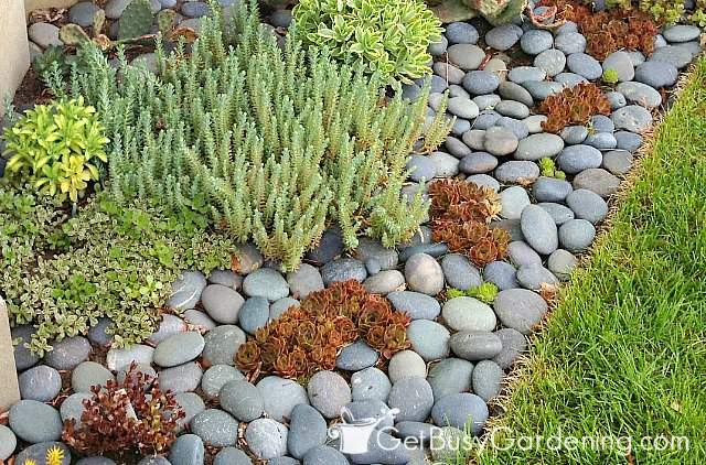Garden soil covered with flat zen rock