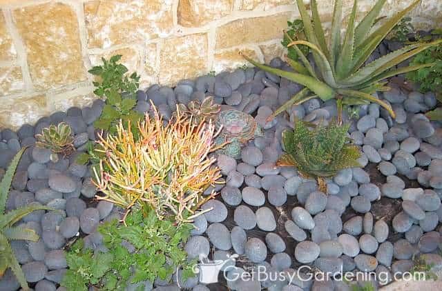 Inspiration for my DIY zen garden design