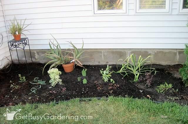 Using succulents as zen garden plants