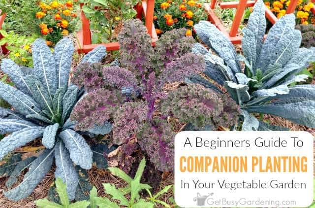 A Beginner's Guide To Companion Planting