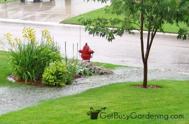 Major rainwater runoff causes erosion in my garden