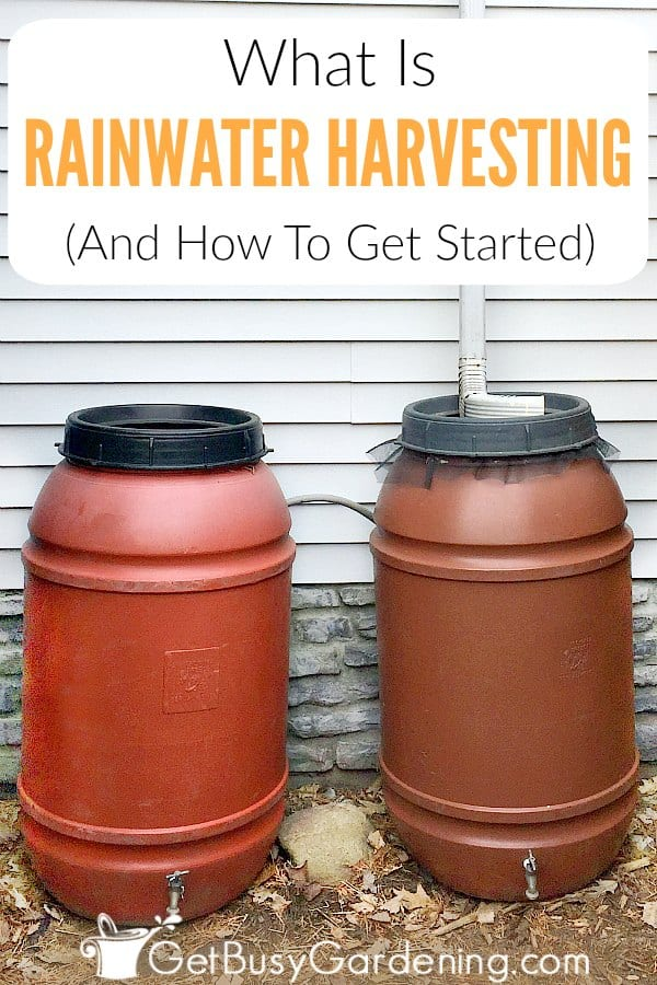 Rainwater harvesting means capturing rainwater and storing it for later. Most people start by installing a rain barrel to catch rainwater runoff from their house using a rainwater gutter diverter. Learn how to start a simple rainwater collection system, and get tips for storing and using rainwater in the garden.