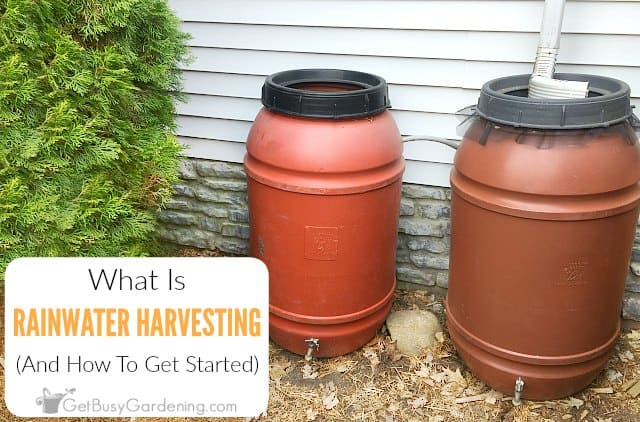 What is rainwater harvesting and how to get started
