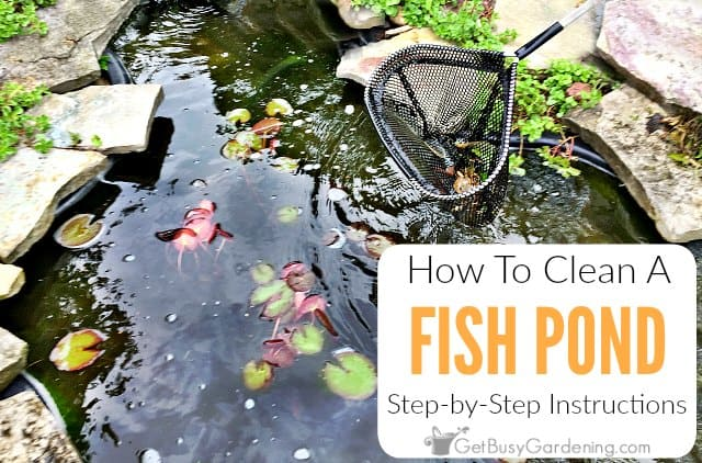 Diy Fish Pond Cleaning Instructions, How To Keep Outdoor Fish Pond Clean