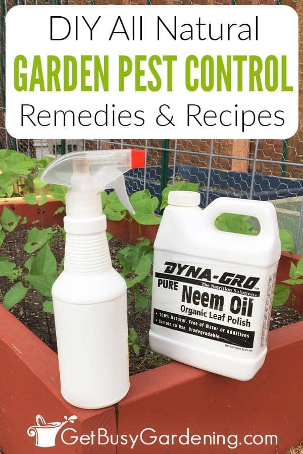 DIY All Natural Garden Pest Control Remedies & Recipes