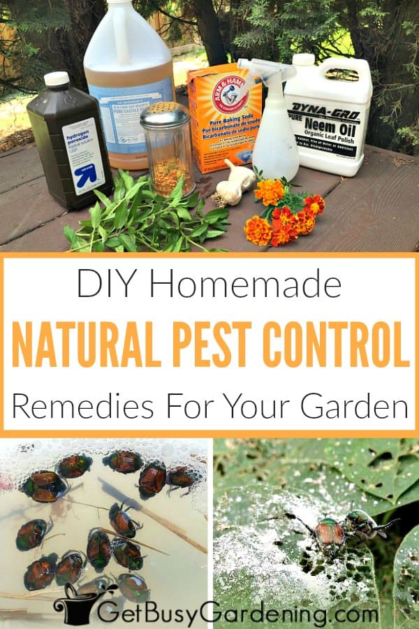 DIY Homemade Natural Pest Control Remedies For Your Garden