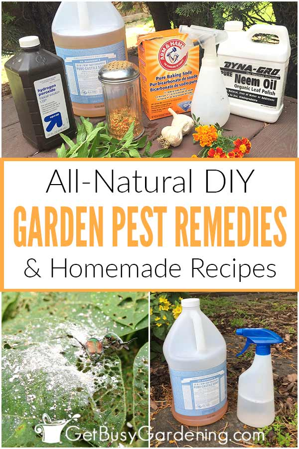 All-Natural DIY Garden Pest Rememdies & Homemade Recipes