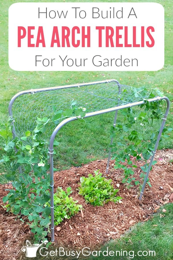 If you're looking for a fun and unique homemade pea trellis for your garden, this easy pea arch trellis DIY is quick to make, and perfect for growing peas.