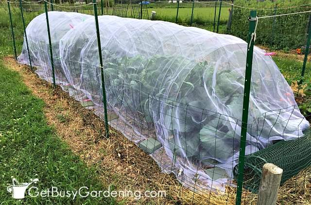 Row covers work to protect plants from bugs and birds