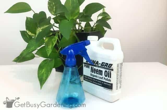 Neem oil natural pesticide for houseplants