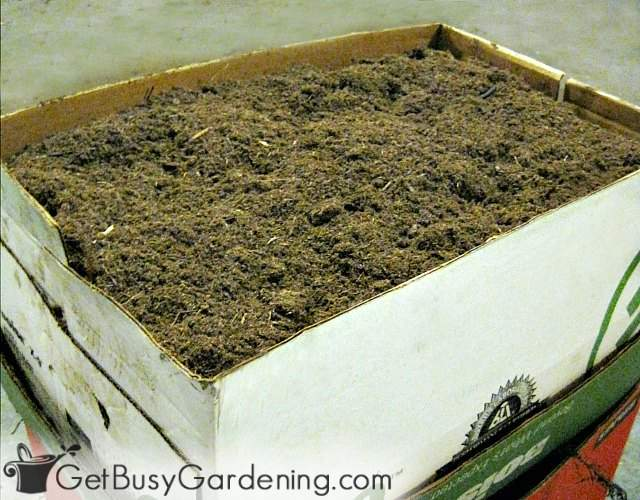 Storing caladium bulbs for winter in peat moss