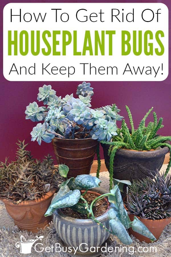 How To Get Rid Of Houseplant Bugs And Keep Them Away!