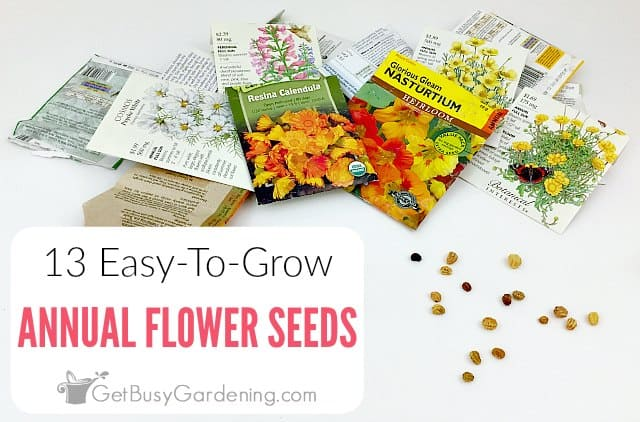 13 Easy Annuals To Grow From Seed
